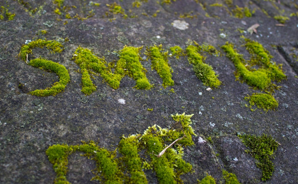 Moss that has grown in the letters of a gave stone.